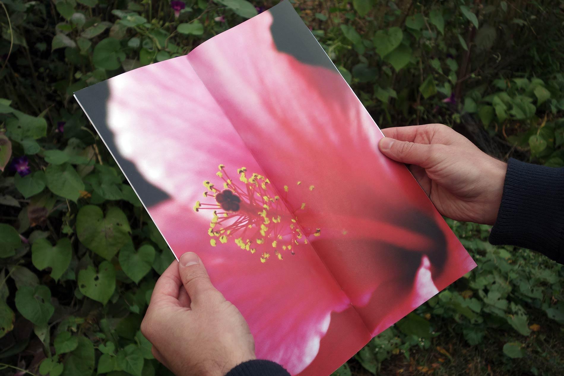 flower_spread